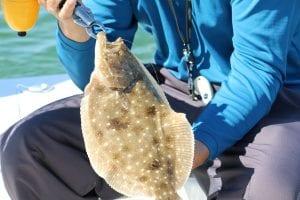 Fishbites-Flounder-Pensacola