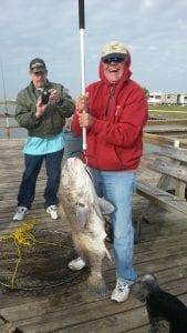 Fishbites EZ Crab 60 pound drum Texas